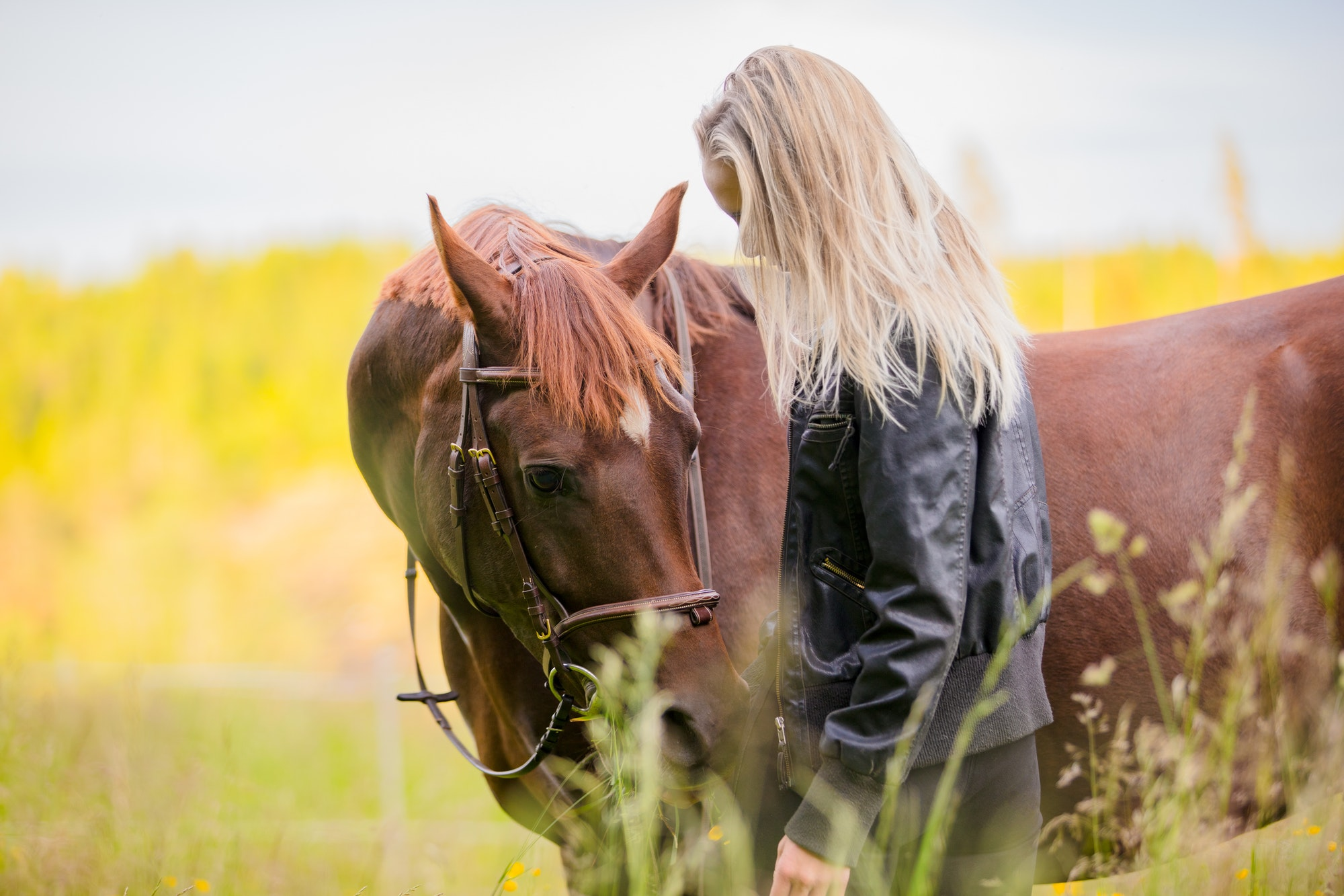 Woman communicate with her beautilful arabian horse friend in the field